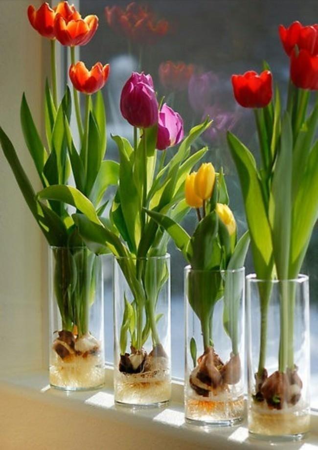 15 Flores Y Plantas Que Te Serán Muy Fácil Cultivar Con Sólo Un Vaso ...